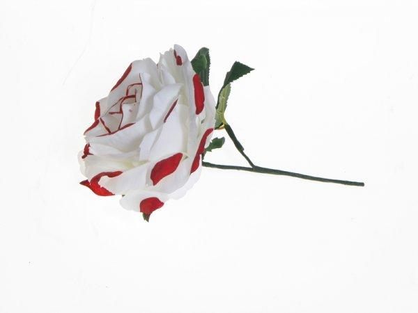 Weiße Haarblume mit roten Punkten